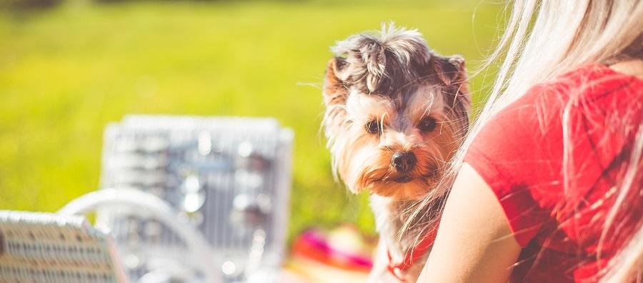 【犬好き集まれ!】週10時間~♪ペット×シェアエコ領域で開発をお任せ!